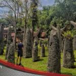 Simbuang Batu Rante,Menhir Dari Era Megalitikum Toraja Yang Masih Dipertahankan Hingga Kini.